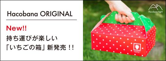 持ち運びが楽しい「いちごの箱」新発売!!